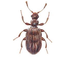 Plaster Beetles - Building Defect Analysis