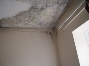 Mould caused by ineffective ventilation and poorly insulated loft space.